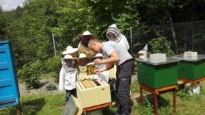 oto co pszczoły produkują